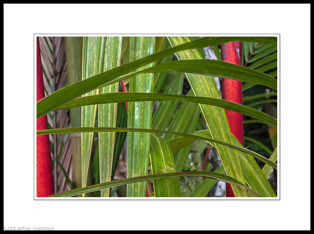 tropical plants | layer upon layer