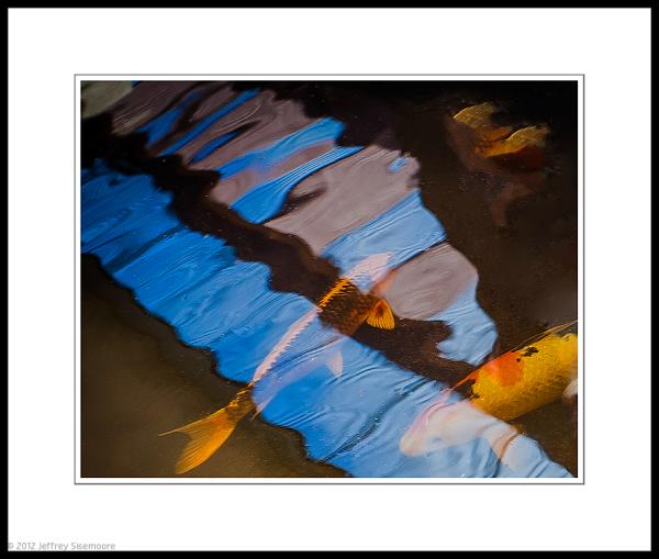 reflecting upon fish