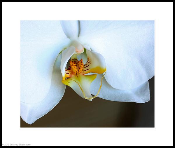 orchid macro #1