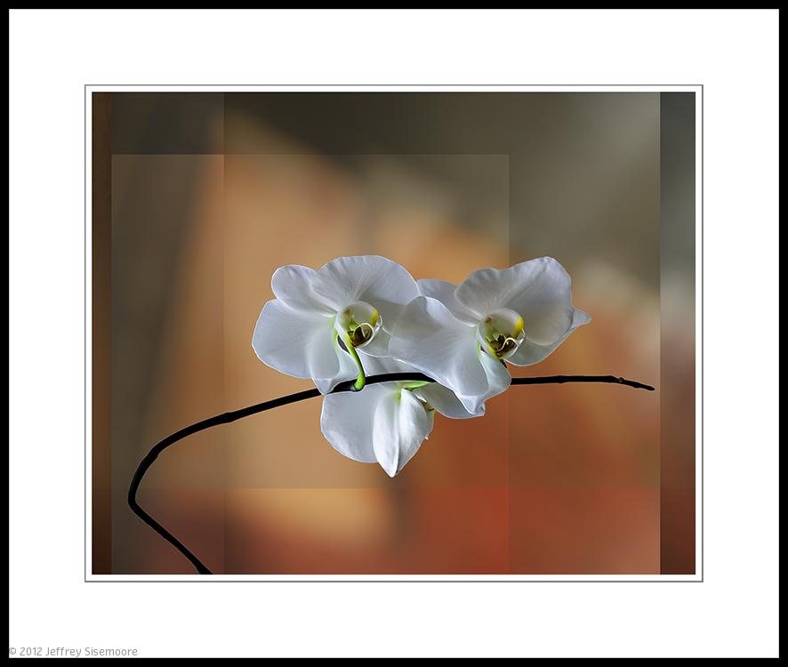 orchid macro #3