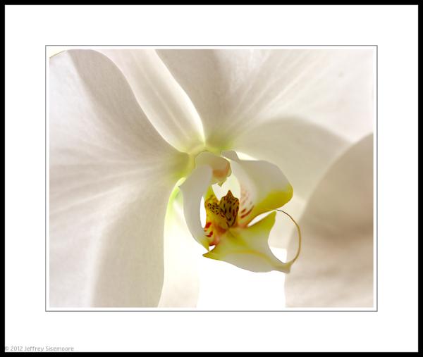orchid macro #4