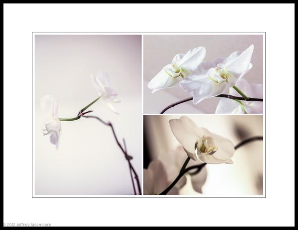 orchid macro #6