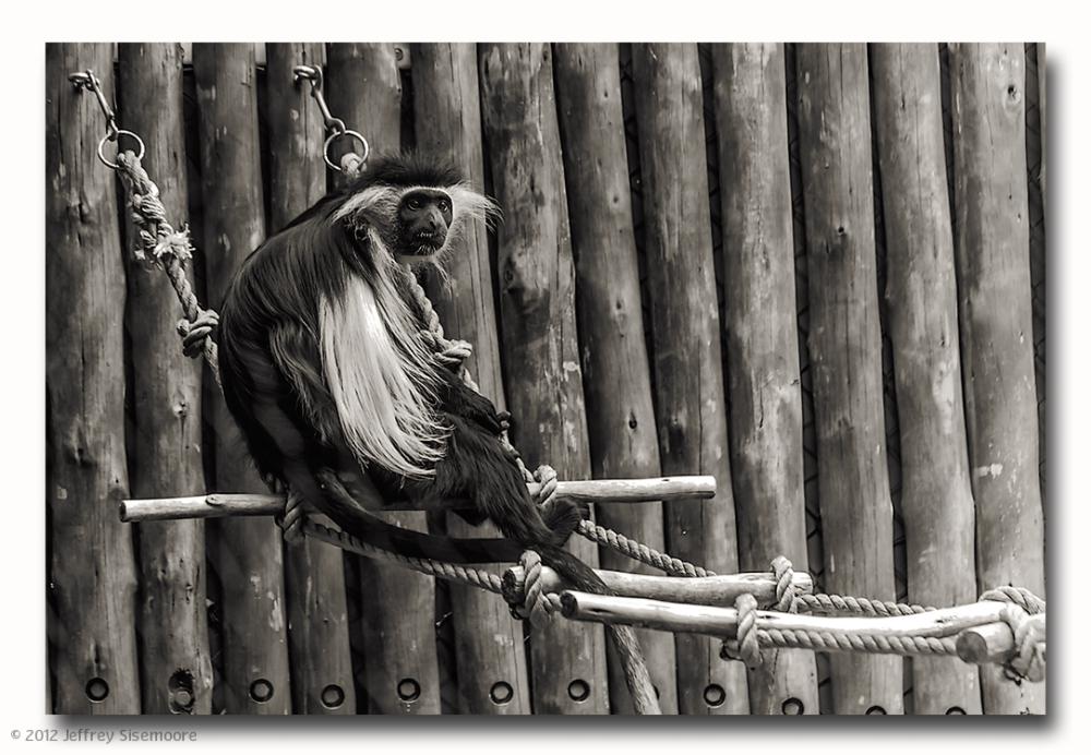 zoo VII