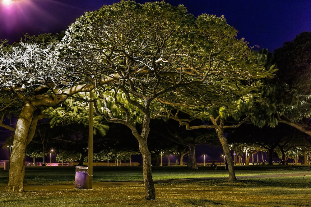 ala moana park at night