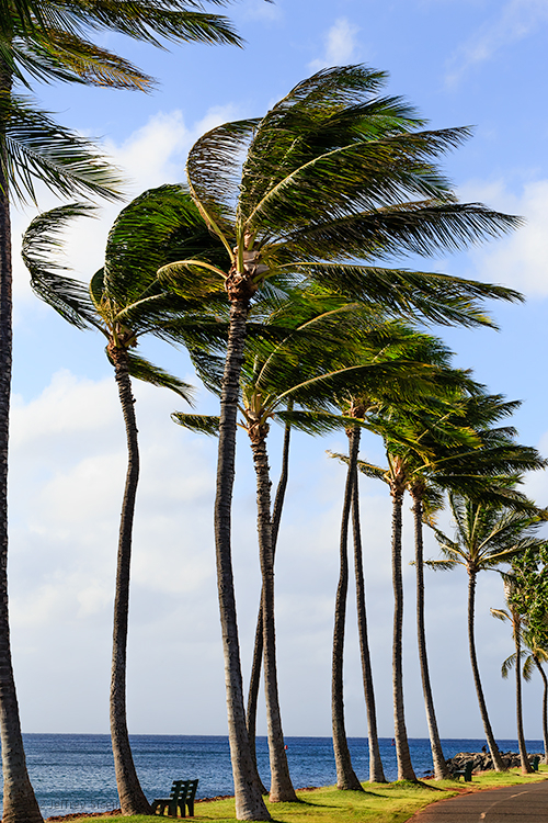 the tall palms
