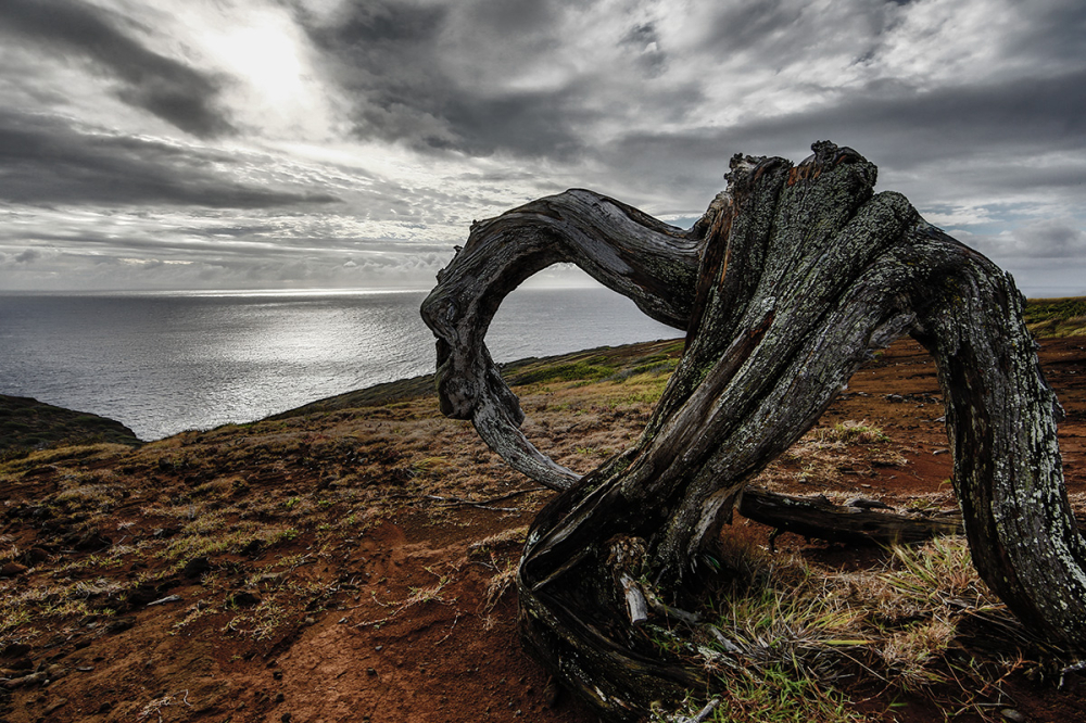 the dancing stump