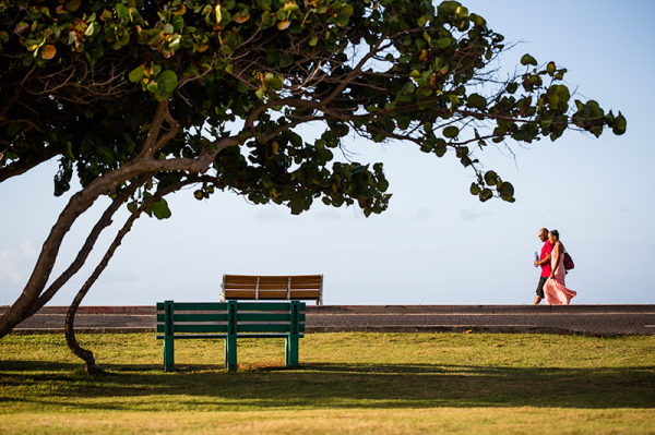 people couple benches tree hawaii