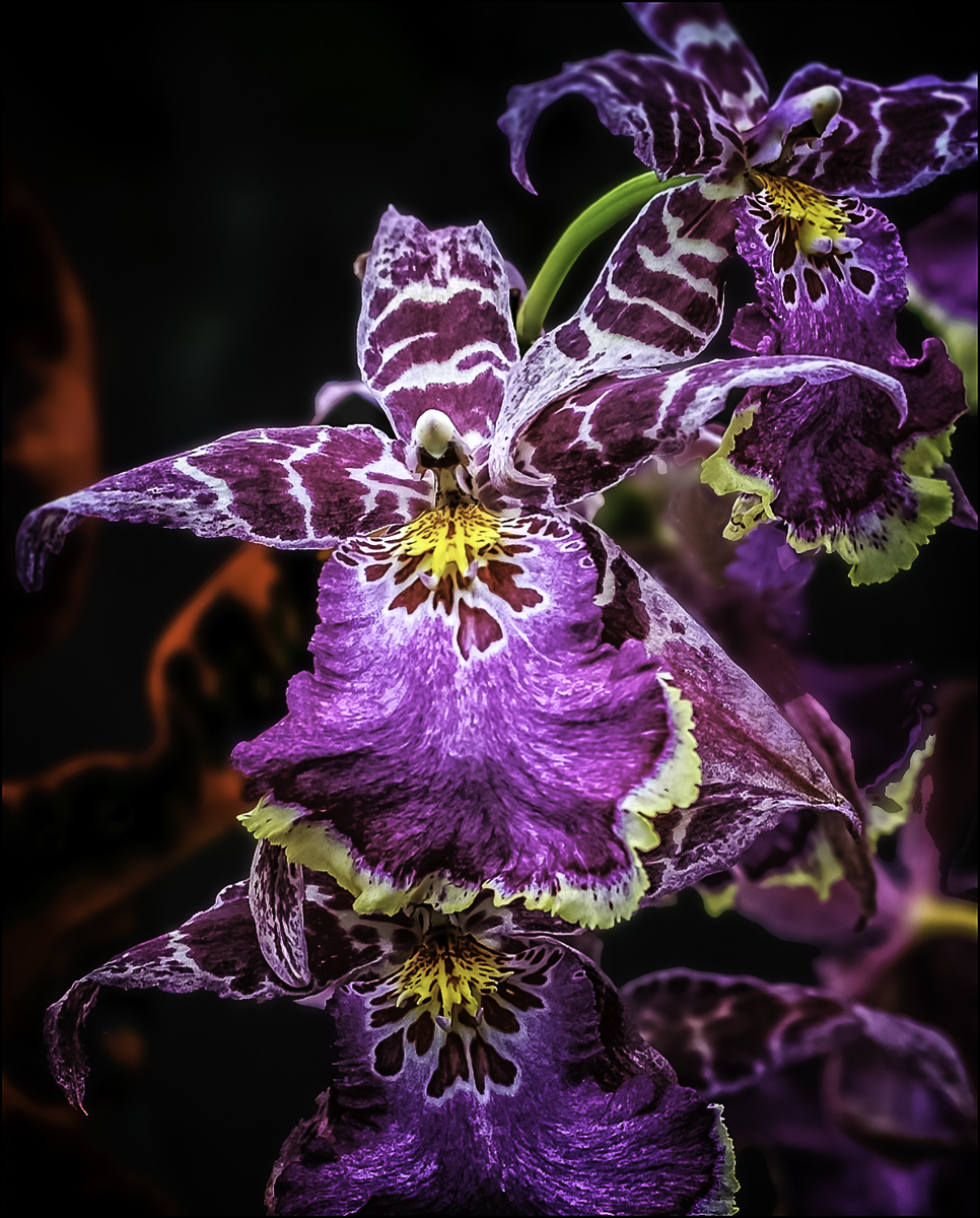 orchids in a rain forest