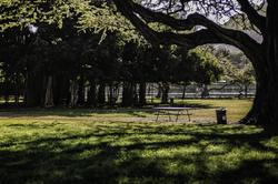morning sun in kapiolani park