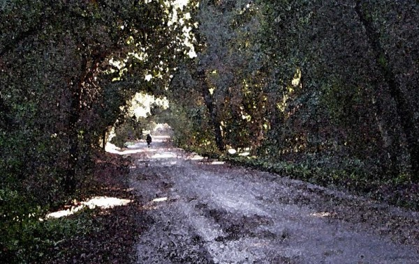 Looking down the lane