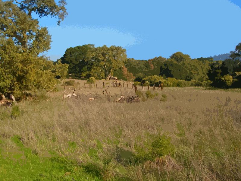 Hillbrook Trail