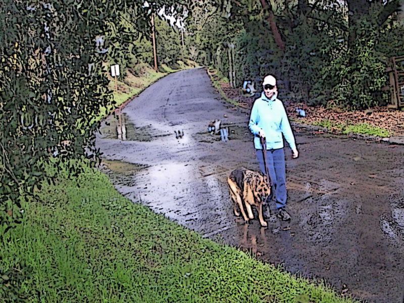 Walker and dog on a wet country lane