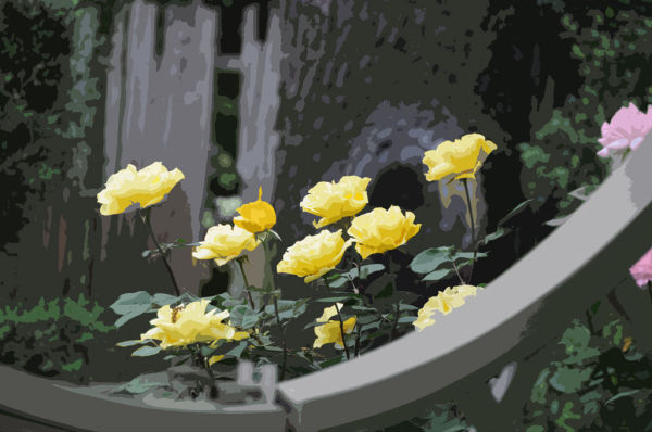Yellow Roses Highlighted by Muted Colors