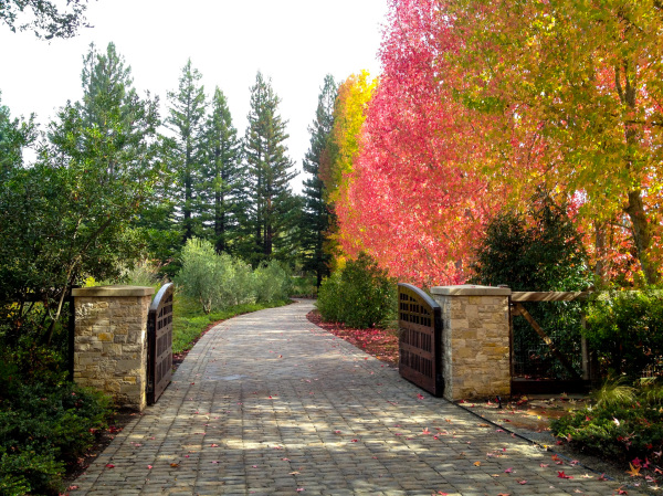 Fall colors come to Woodside