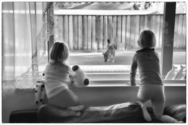 Peering through the window