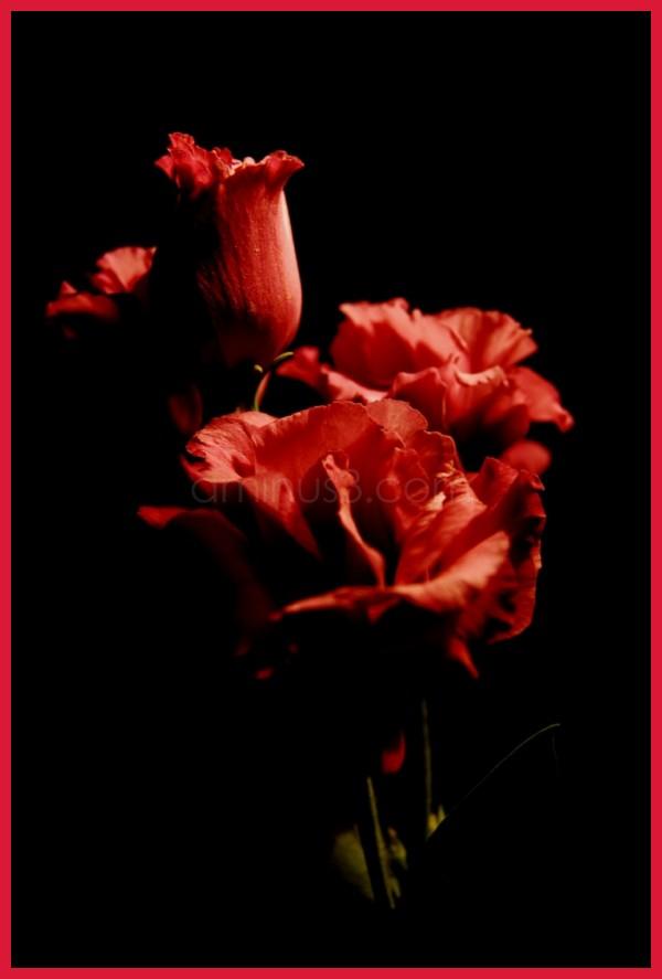 flowers of heaven
