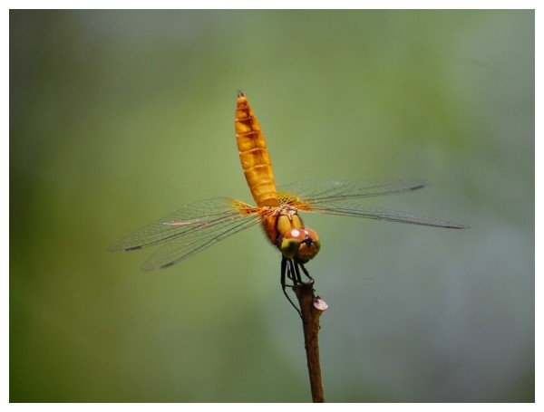 Beauty of a Dragon Fly