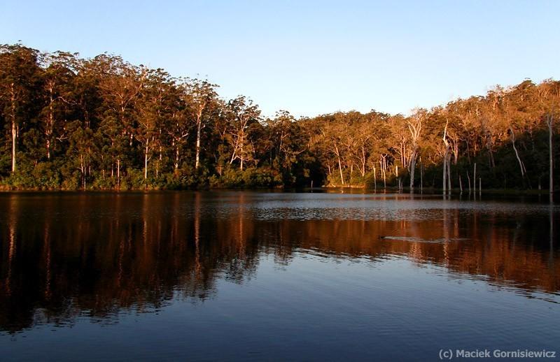 Karri forest in Werstern Australia