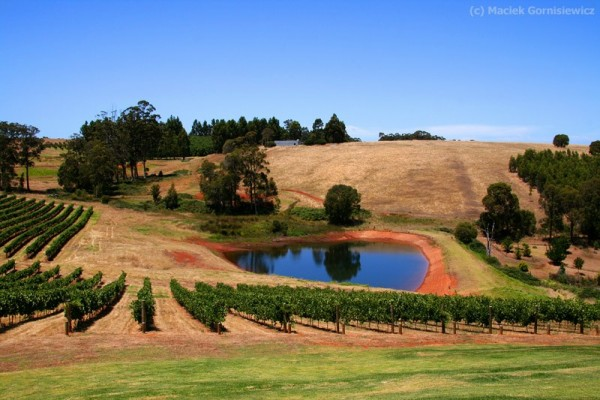 Winery is the South West Region of Australia