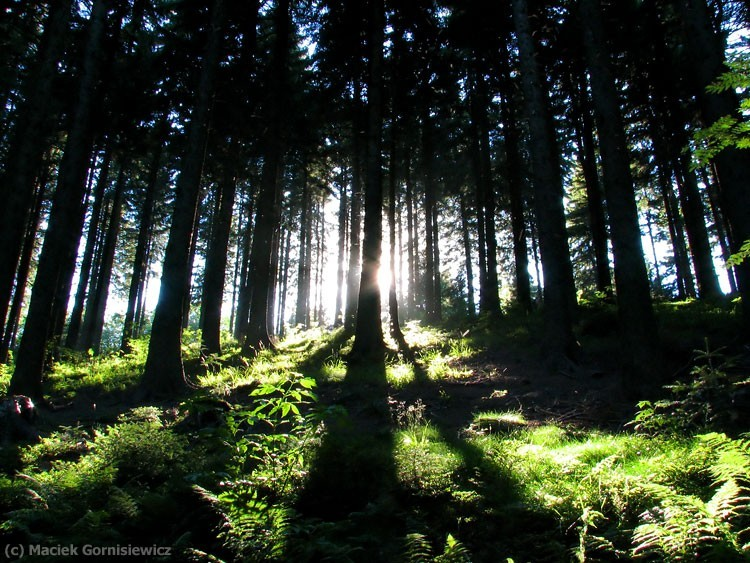 Rays of light through the forest.