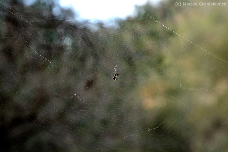 Spider and its web.