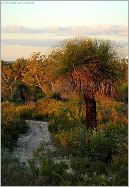 Coastal Plains Walk Trail