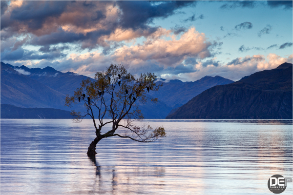 guardians of Wanaka