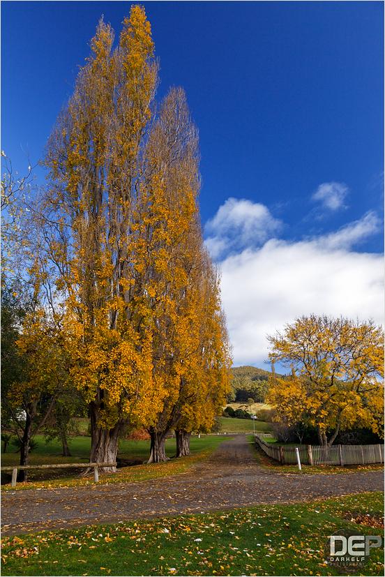 Tassie Autumn