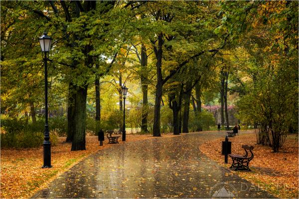 Rainy Autumn Day