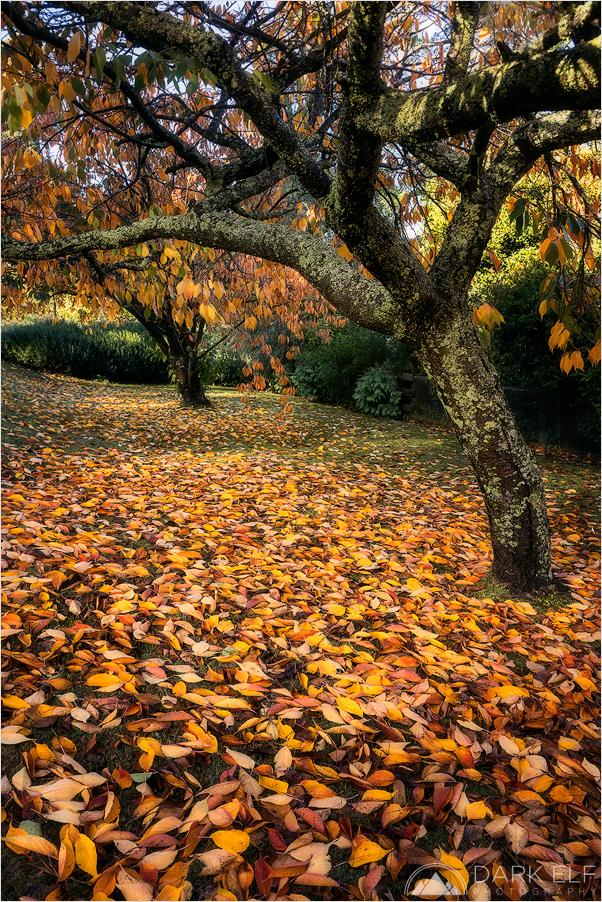 Autumnal Wanderings