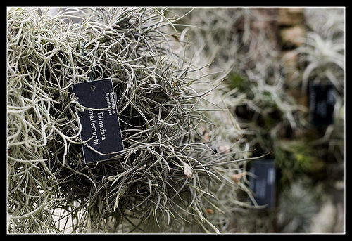 a plant at RHS Wisley