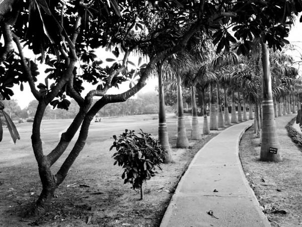 Tree scape (Image 15)