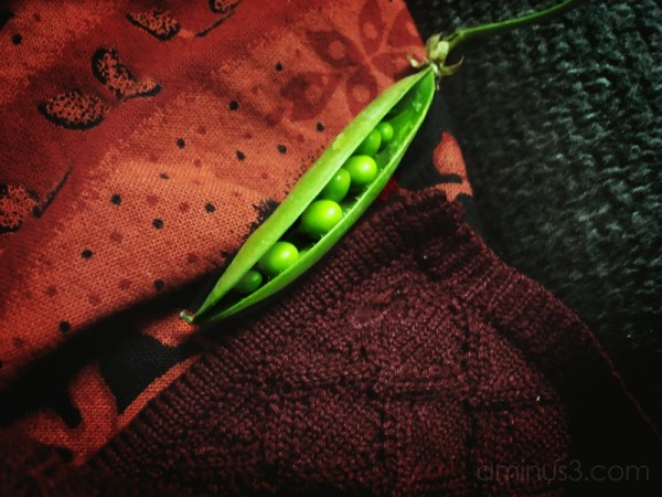 Peas (Image 34)