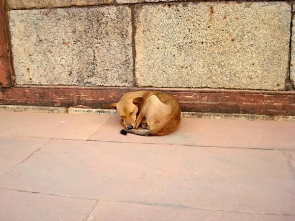 stray dog (Image 36)