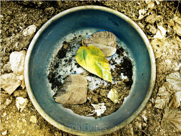Leaf in tub