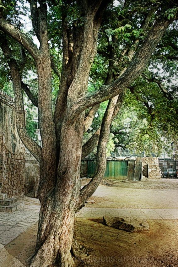 Tree at Hauz Khas