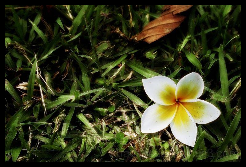 Fallen flower