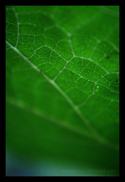 Leaf Lines I