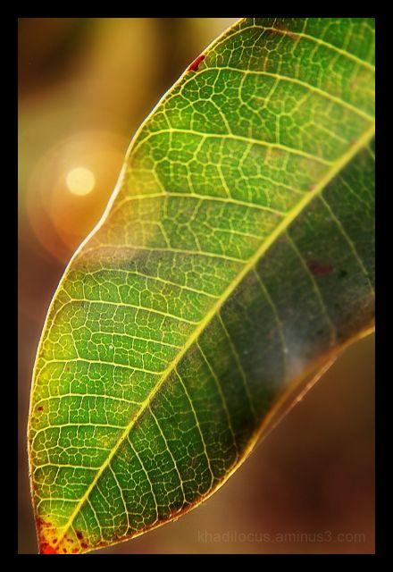 Leaf Lines III