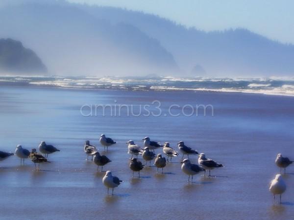 Oregon coast beach with seagulls