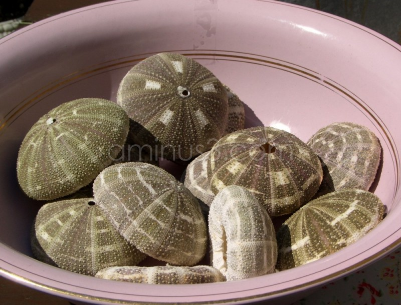 seaurchins in bowl