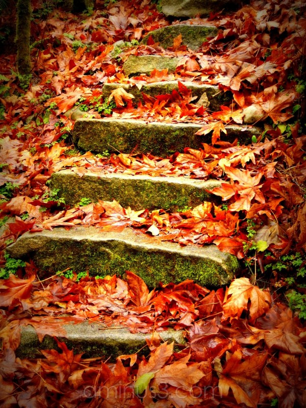 Steps with fall leaves