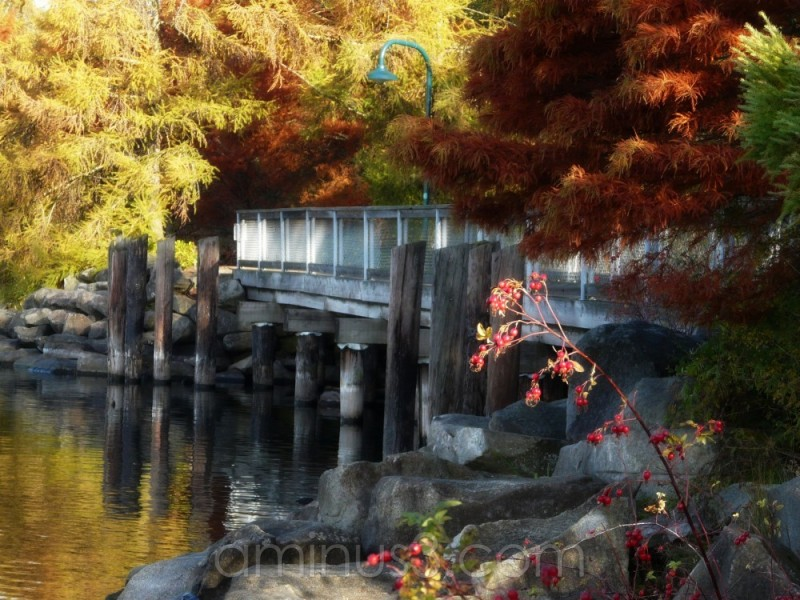 autumn scene
