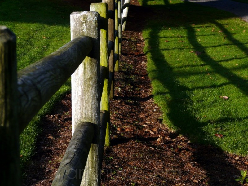 fence with shadow patterns