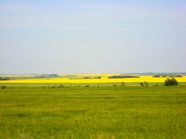 Saskatchewan Prairie