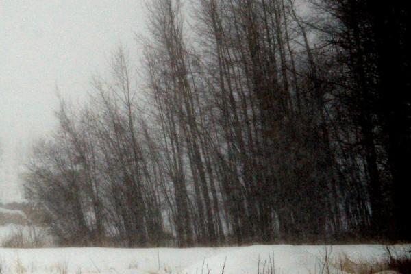 snow trees ridgevalley