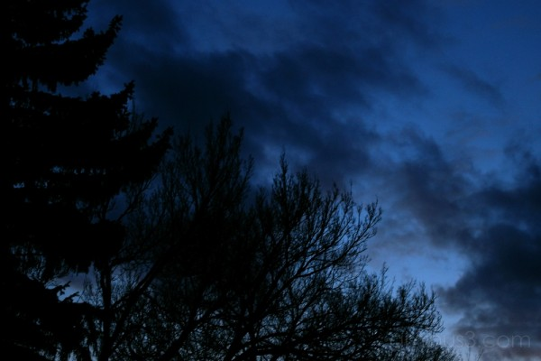 Winter night sunset tree