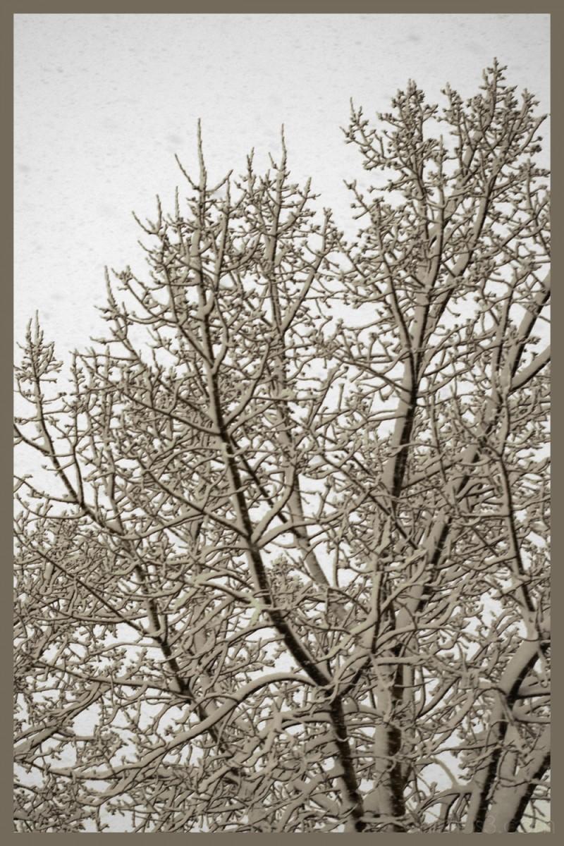 winter snow tree calgary