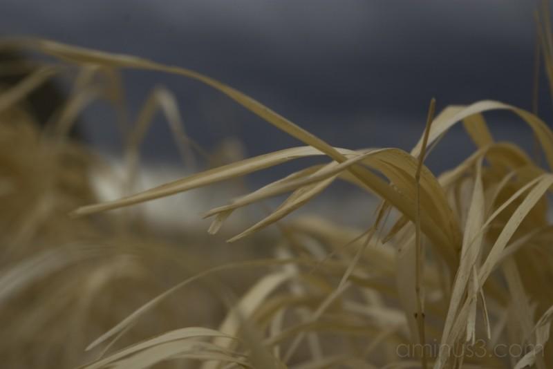 storm clouds grass prairie