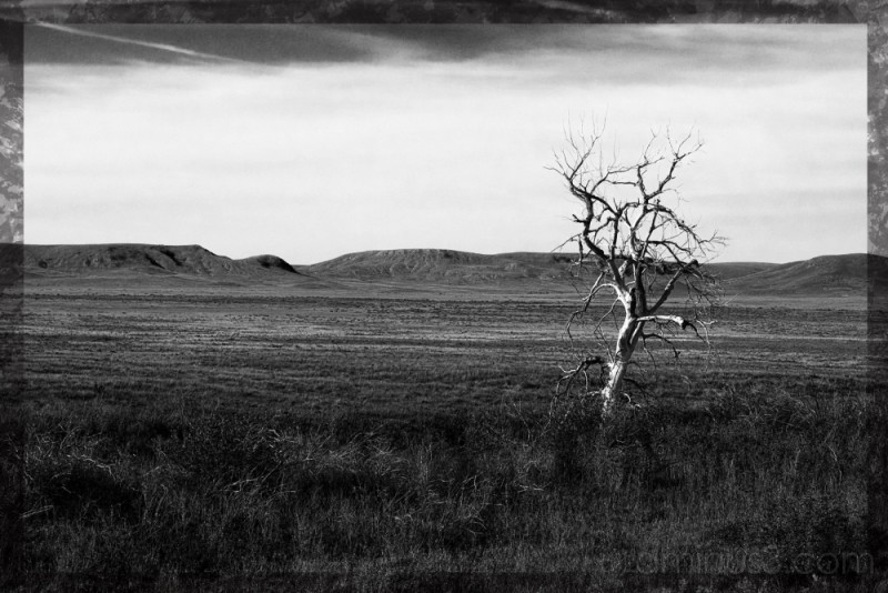 tree grasslands